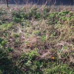 Blumenwiese -- Wintertracht