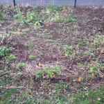 Blumenwiese -- aufgeräumt