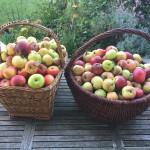 Zwei Körbe Äpfel